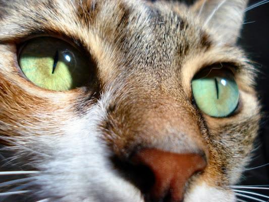 Occhio felino di miscy