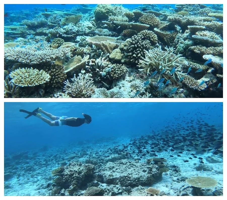 snorkeling maafushi