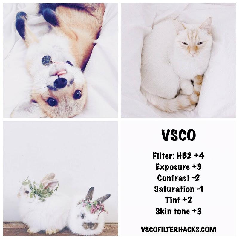 White Fur Instagram Feed