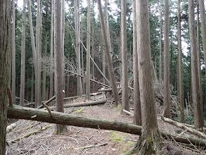 ここも倒木が多い