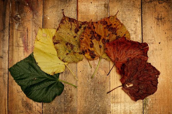 Arriva l'autunno! di Stefano Ferrari