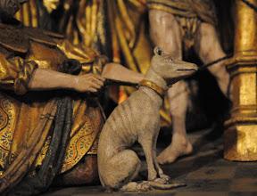 Photo: Hund mit goldenem Halsband