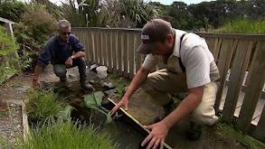 Giant Eels thumbnail