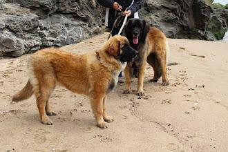 Photo: Une première pour Ibanez sur une plage