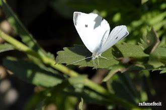 Photo: Érase una vez una mariposa blanca - Castrogonzalo [2010]