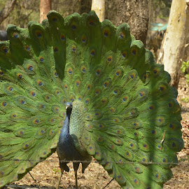 Inanimate objects by Sunil Shripad - Artistic Objects Still Life ( #bird, #rock garden, #inanimate objects, #peacock, #photography,  )