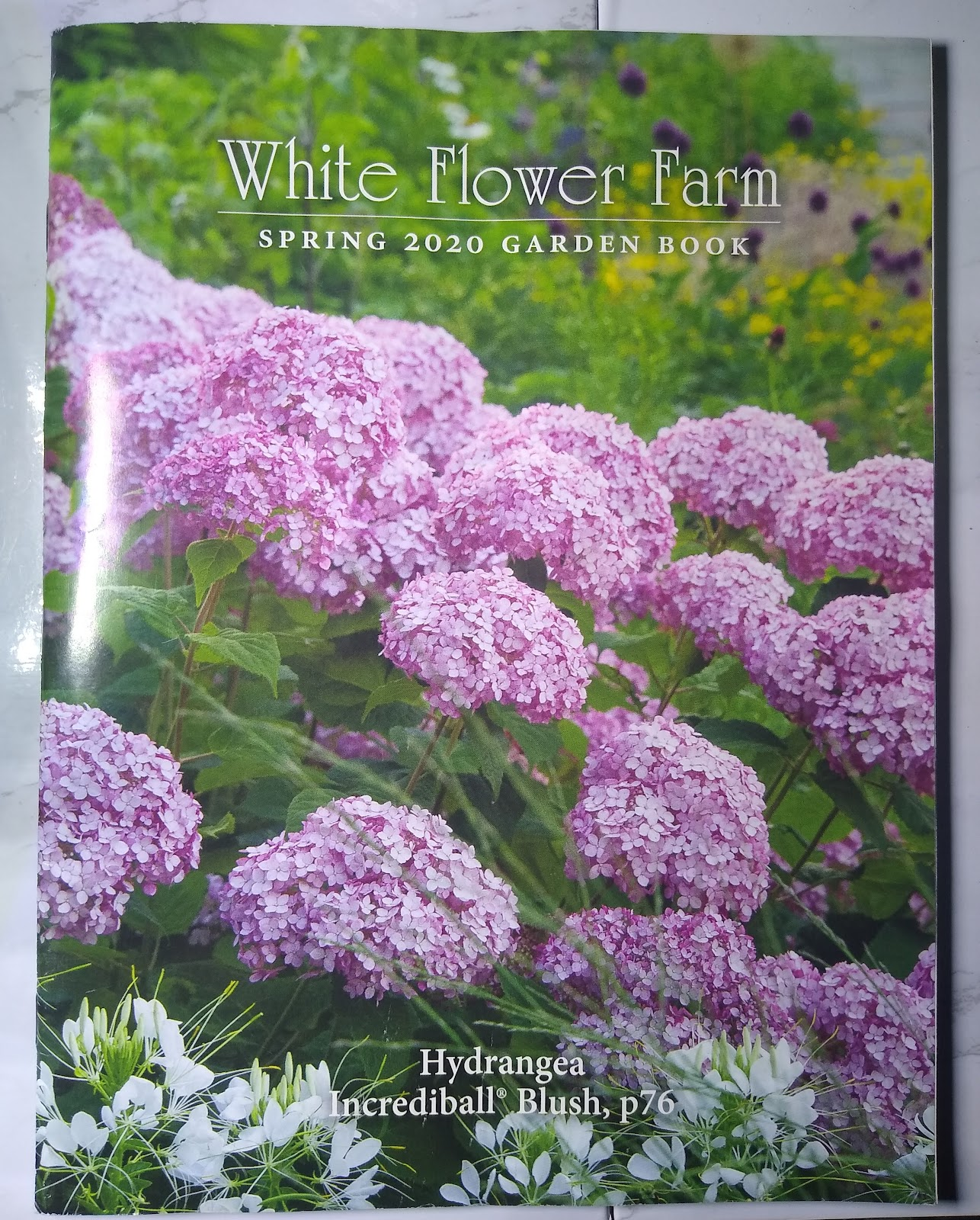 White Flower Farm catalog picture