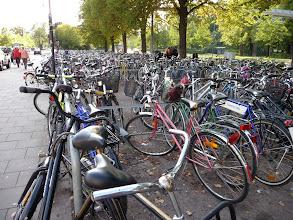 Photo: Po městě funguje doprava nejlépe na kole