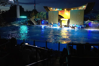 Photo: SeaWorld http://ow.ly/caYpY
