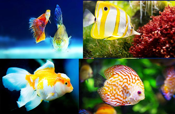 Ornamental Fish Business