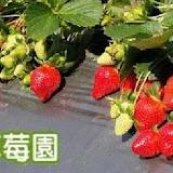 郁盈草莓園