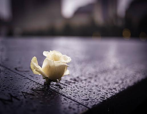 Una rosa per non dimenticare di th3storyteller