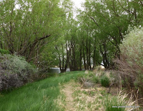 Photo: The bird magnet at the Fields Oasis, surrounded by miles of sagebrush and greasewood
