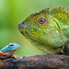 Dragon Forest And Flying Frog by Riza Arif Pratama - Animals Amphibians ( animals, lizard, frog, green, amphibian, side view, sunlight, bokeh, two, blue, no people, reptile, big, small, animal )