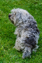 Photo: Eco, Laura's dog.  Laura is the daughter of Sperello and Carla, the owners of the villa.  Laura works in Florence.