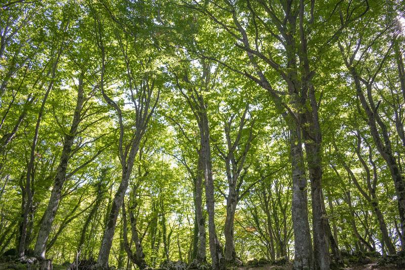 Bosco in verde di giada_marchegiani