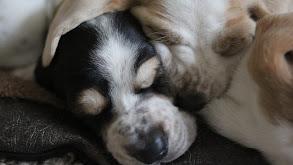 Wonderful World of Puppies and Kittens thumbnail