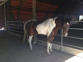 Photo: My beautiful horse was named Max