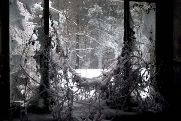 Da una finestra...... di Zerosedici