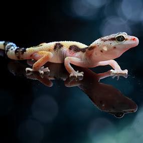 my reflection by Caraka Pamungkas - Animals Reptiles