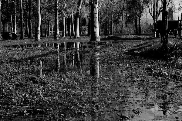Nature. di sonia_camardo