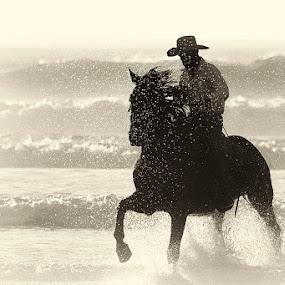 Sea Spray by Chris Seaton - Black & White Portraits & People ( horse, waves, ocean, sea spray, animals, people,  )