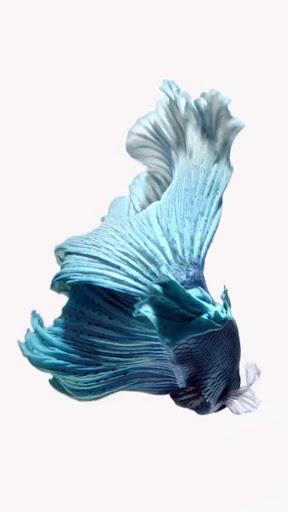 6S BlueFish LiveWallpaper