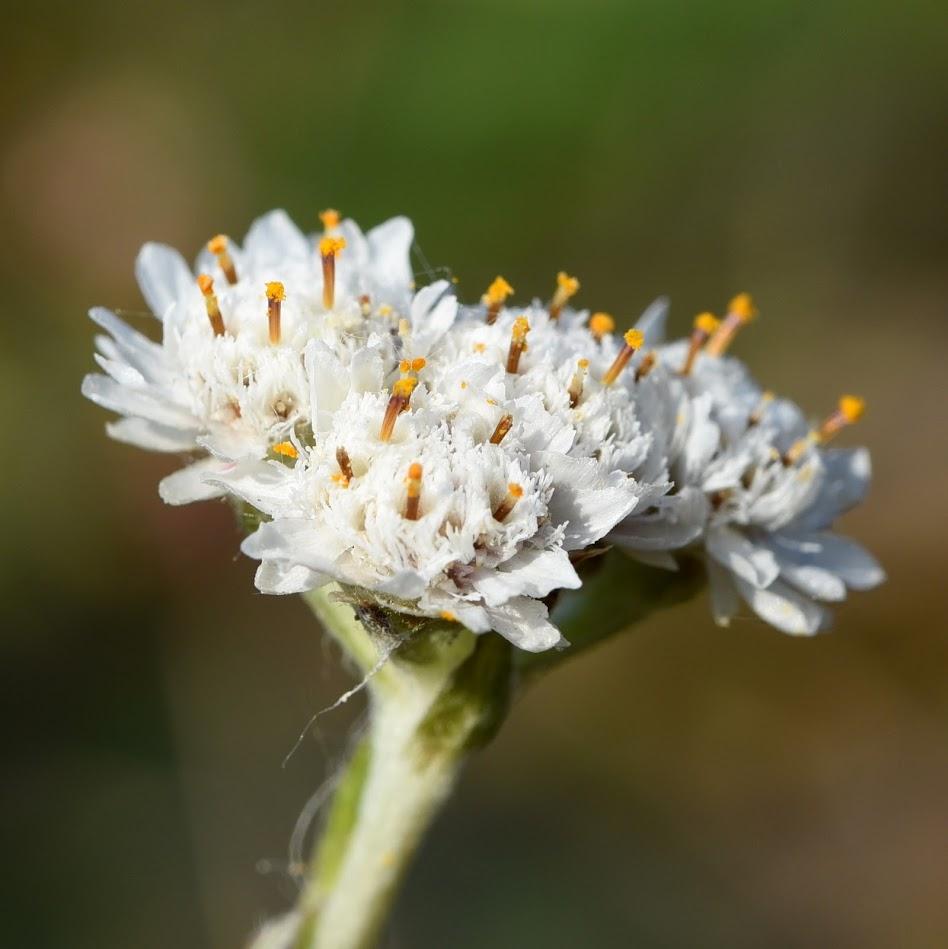 bloem (mannelijk)