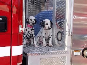 Photo: Fireman's Friend