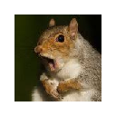 Squirrels Wallpapers & New Tab