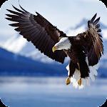 Bald Eagle Wallpaper Icon