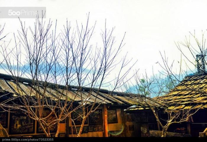 Lá cây rụng dần báo hiệu mùa đông Sapa đã đến trước ngõ