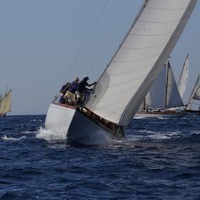 Classic Regatta by Alessandra Antonini - Sports & Fitness Watersports ( watersport, sailing, summer, sea, classicboat, sailingboat, regatta, daylight, sun,  )