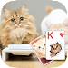Solitaire Lovely Cats Theme Icon