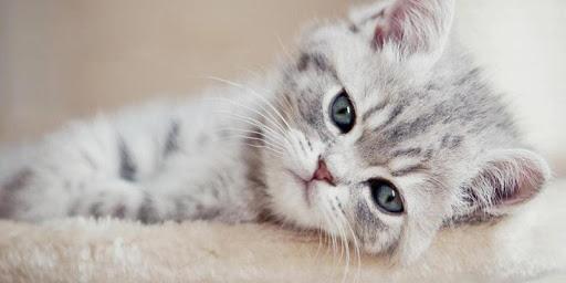 かわいいキティのテーマ