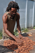 Photo: How to make chocolate: step one dry the seeds