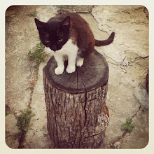 Photo: Pet portrait - Cat on a stump #cat #pet #stump #intercer #romania #white #black - via Instagram, http://instagr.am/p/MEFPTgpfpr/