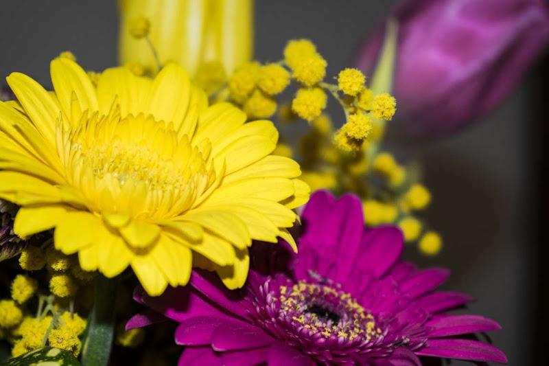 Primavera Bicolore di ayrton73