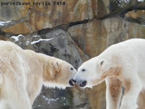 Photo: Zwei ausgelassene Eisbaerkids ;-)