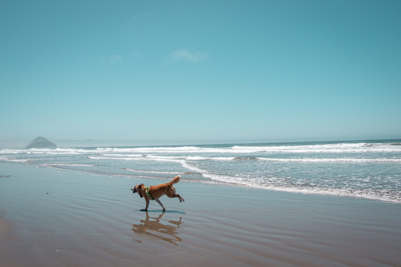 things to do in with dogs in florida