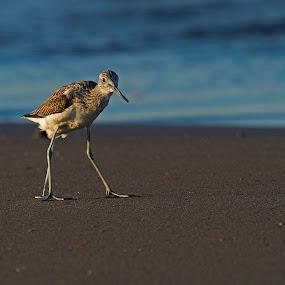 PANTANA by Nando Scalise - Animals Birds