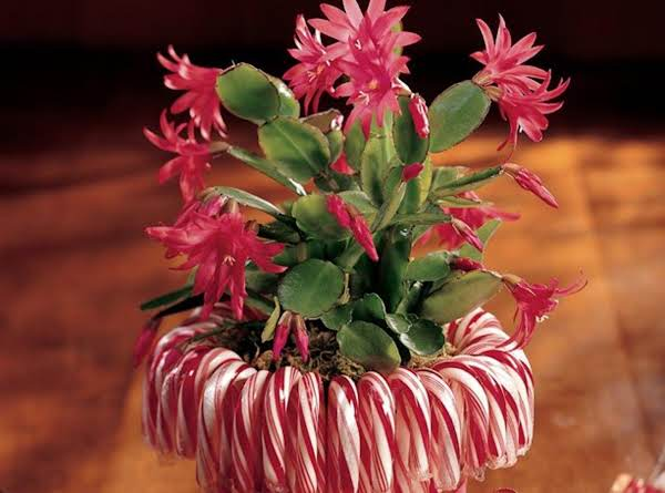 Candy Candy Cane Planter
