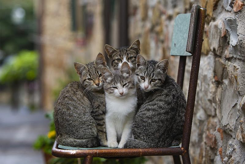 Gattini di Giorgiopaggetti