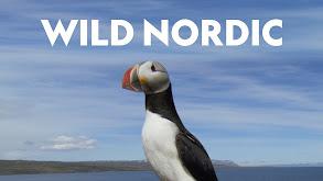 Wild Nordic thumbnail