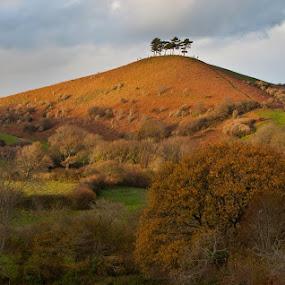 Clump by Alex Newstead - Landscapes Mountains & Hills ( hill, clump, autumn, sunset, steep, trees, view, dorset )