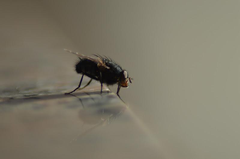fly, fly, fly!!! di Photosimp