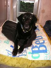 Photo: Diesel heeft zijn plekje in de kennel gevonden!
