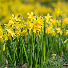 @nikonforever @nikon_owners @nikoneurope @nikontop @nikontop_ @nikon_macro @nikonflowers@_.nikon_photography by Sue Tydd - Flowers Flower Gardens ( nikon, nikontop, nikond5200, dunhammassey, dunham )