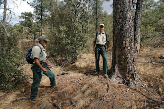 Photo: The new state champion Ponderosa Pine (Pinus ponderosa var. scopulorum) is likely to be found either here in the Davis Mountains or in Guadalupe Mountains National Park.
