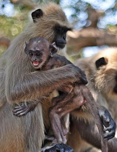 Hey!Don't Disturb Me When I Am Busy With Mom... by Kausik Das - Animals Other Mammals ( pwcbabyanimals )